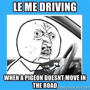 Y U No Driver Edition - le me driving  when a pigeon doesnt move in the road