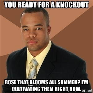 Successful Black Man - you ready for a knockout rose that blooms all summer? I'm cultivating them right now.