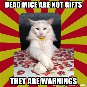 Dictator Cat - dead mice are not gifts they are warnings