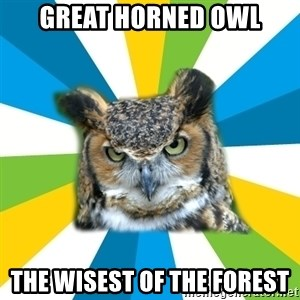 Old Navy Owl - Great horned owl The wisest of the forest