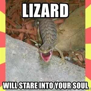 lizard - lizard will stare into your soul