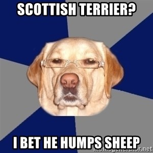 Racist Dog - Scottish terrier? i bet he humps sheep