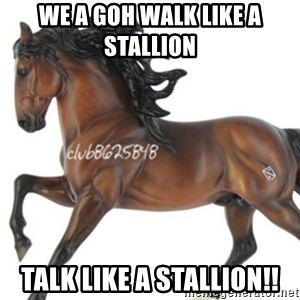 Typical horse model collector - We a goh walk like a stallion  talk like a stallion!!