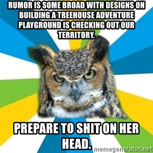 Old Navy Owl - rumor is some broad with designs on building a treehouse adventure playground is checking out our territory. prepare to shit on her head.