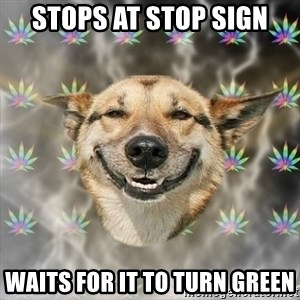 Stoner Dog - stops at stop sign waits for it to turn green