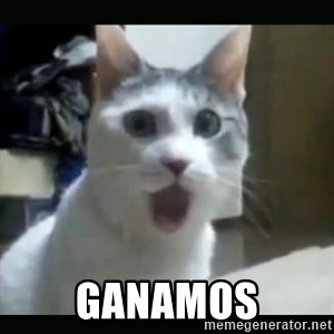 Surprised Cat - GANAMOS