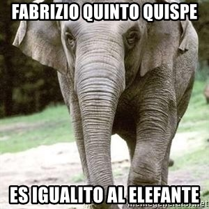 Eating Disordered Elephant  - fabrizio quinto quispe es igualito al elefante