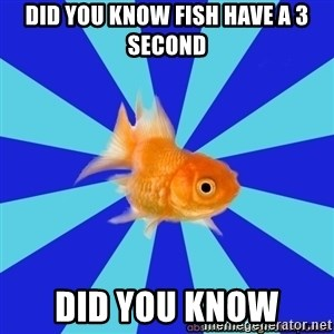 Absentminded Goldfish - DID YOU KNOW FISH HAVE A 3 SECOND DID YOU KNOW