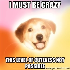 Holy Advice Dog - I must be crazy this level of cuteness not possible