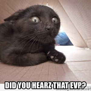 Paranoid cat - did you hearz that evp?