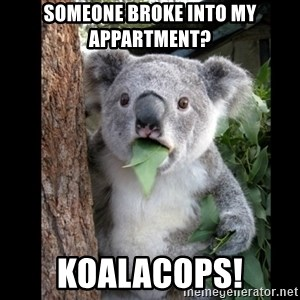 Koala can't believe it - Someone broke into my appartment? Koalacops!