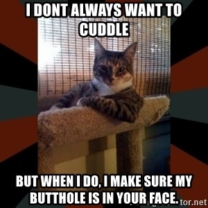 The Most Interesting Cat in the World - i dont always want to cuddle but when i do, i make sure my butthole is in your face.