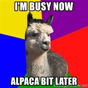 Arashian Alpaca - I'm busy now Alpaca bit later