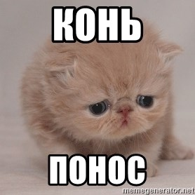 Super Sad Cat - КОНЬ ПОНОС