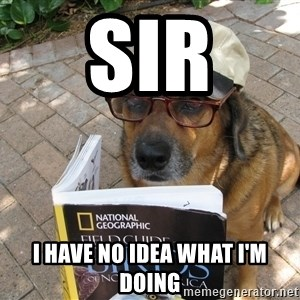 Dog Studying - Sir I have no idea what i'm doing