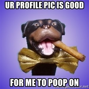 Triumph the Insult Comic Dawg - ur profile pic is good for me to poop on
