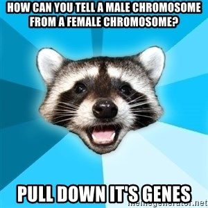 Lame Pun Coon - how can you tell a male chromosome from a female chromosome? pull down it's genes