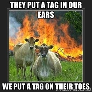 Evil Cow  - They put a tag in our ears we put a tag on their toes