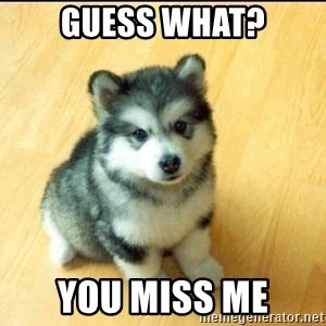 Baby Courage Wolf - guess what? you miss me