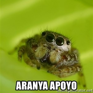 The Spider Bro - ARANYA APOYO