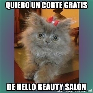 cute cat - quiero un corte gratis de hello beauty salon