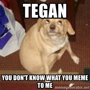 Oh You Dog - Tegan you don't know what you meme to me