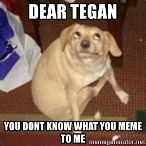 Oh You Dog - dear tegan you dont know what you meme to me