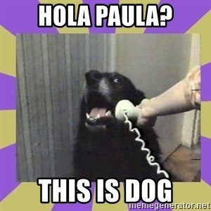 Yes, this is dog! - hola paula? this is dog