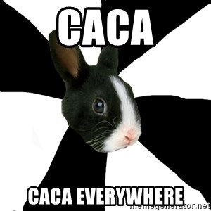Roleplaying Rabbit - caca caca everywhere