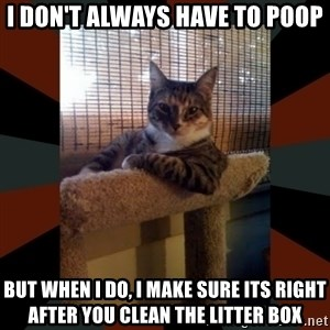 The Most Interesting Cat in the World - I don't always have to poop But when I do, I make sure its right after you clean the litter box