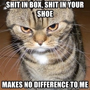 angry cat 2 - Shit in box, shit in your shoe makes no difference to me