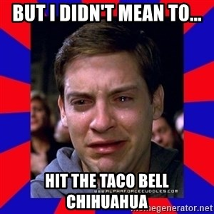 Sad Tobey Maguire - but i didn't mean to... hit the taco bell Chihuahua