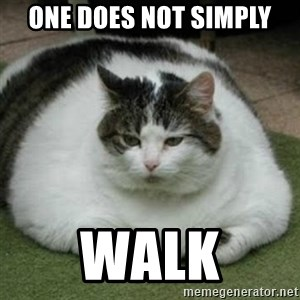 Lazy Fat Cat - One does not simply Walk