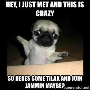 Confused Pug - Hey, i just met and this is crazy so heres some tilak and join jammin maybe?