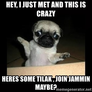 Confused Pug - Hey, i just met and this is crazy heres some tilak , join jammin maybe?