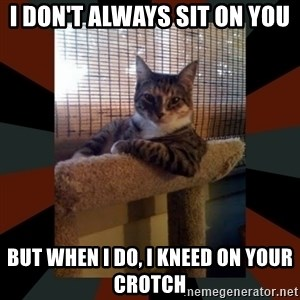 The Most Interesting Cat in the World - i don't always sit on you but when i do, i kneed on your crotch