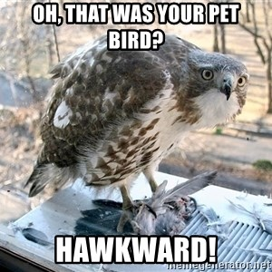 Hawkward - oh, that was your pet bird? hawkward!