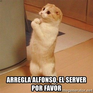 Sorry Cat - Arregla alfonso, el server por favor