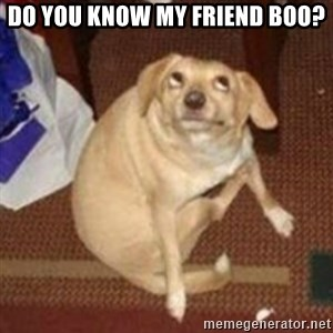 Oh You Dog - Do you know my friend boo?