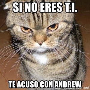 angry cat 2 - si no eres t.i. te acuso con andrew