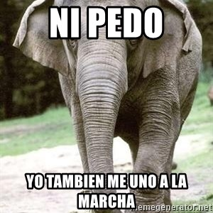 Eating Disordered Elephant  - ni pedo yo tambien me uno a la marcha
