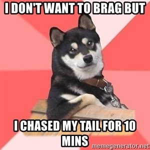 Cool Dog - i don't want to brag but  i chased my tail for 10 mins