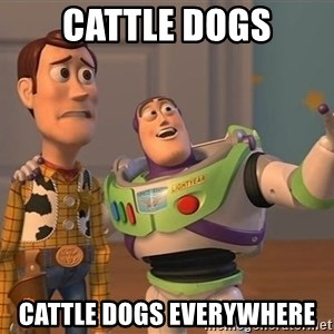 Toy Story Everywhere - CATTLE DOGS cattle dogs everywhere