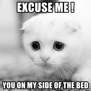 Sadcat - EXCUSE ME ! YOU ON MY SIDE OF THE BED