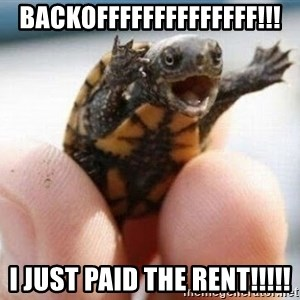 angry turtle - backoffffffffffffff!!! I just paid the rent!!!!!