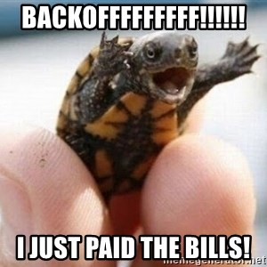 angry turtle - backofffffffff!!!!!! I just paid the bills!