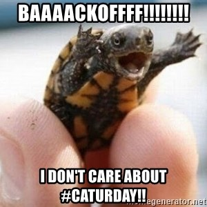 angry turtle - baaaackoffff!!!!!!!! i don't care about #caturday!!