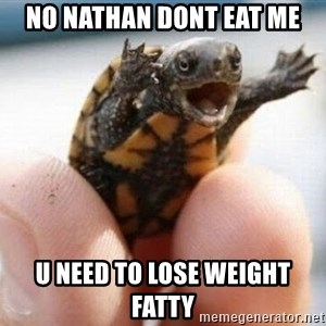 angry turtle - no nathan dont eat me u need to lose weight fatty