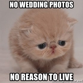 Super Sad Cat - No wedding photos no reason to live