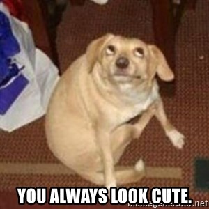 Oh You Dog - You always look cute.
